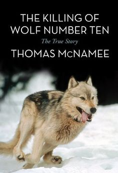 """Read """"The Killing of Wolf Number Ten The True Story"""" by Thomas McNamee available from Rakuten Kobo. A killer. A manhunt. The triumph of justice and of the wolf. The greatest event in Yellowstone history. Yellowstone Wolves, Yellowstone Park, Native American Songs, Keystone Species, Wolf Book, Amur Leopard, Wild Wolf, Wild Creatures, Nature Reserve"""