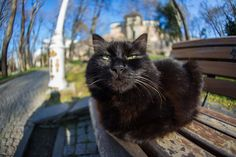 Black Cat - Cat sitting on a bench in a park