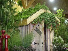 Shed rooftop garden :)