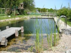 Its a natural, self cleansing pool/pond...