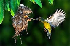 Cool ♥ Mothers Love, Pet Birds, Cool Pictures, Nature, Animals, Nice, Naturaleza, Animales, Animaux