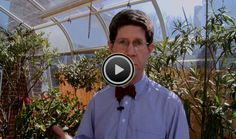 """Lemon(ick) with that Tea? Greenhouse Effect Explained - When is global warming like a cup of tea? Climate Central's Mike Lemonick explains the greenhouse effect, step-by-step. Watch science made simple with this segment of his """"Bowtie Series."""""""