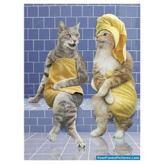 Cat Spa - cat, kitty, spa, animals found on Polyvore