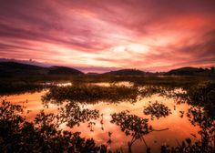 Mangrove Sunset by pete rees images on 500px