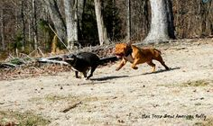 Watch out Terra, Zeus coming after you to get that stick lol