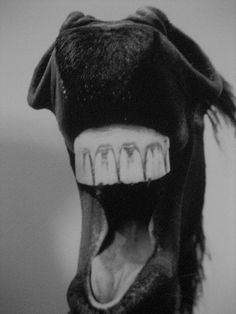 400px-gift_horse_mouth.jpg 400×533 pixels