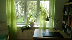 Grüne Vorhänge in schönem Leipziger WG-Zimmer. Wohnung in Leipzig.  #Leipzig #WGZimmer #Wohnen