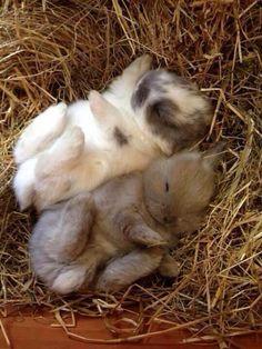 Sleeping baby bunnies!