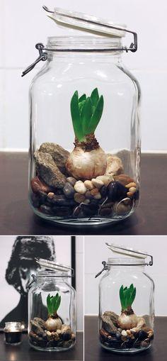 Zwiebeln im Glas