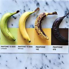Designer combina criativamente cores de diferentes alimentos com as cartelas da Pantone - Follow the Colours