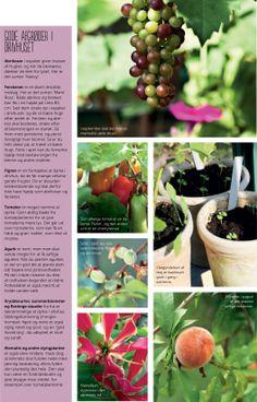 Tips til gode afgrøder i drivhuset