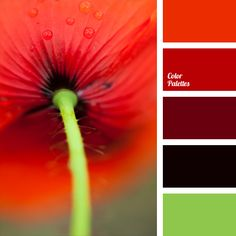 Monochrome palette of shades of red (from dark, almost black, to a light floral) is supplemented with light green color. Panoramic photos of fresh flowers can successfully complement interior of any room; several such images in various sizes but strictly in the same color scheme will add a bright and stylish accent to the living room decorated in pastel tones.