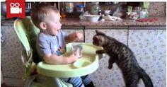 Baby Feeds His Kitten <3  Watch here: http://meowaum.com/2967-baby-feeds-his-kitten/