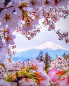 Cherry Blossom- Japan ✨🌸🌸🌸✨ Picture by ✨✨ Bucket list moment! Cherry Blossom- Japan ✨✨ Picture by ✨✨capkaieda✨✨ Japan Picture, Japan Photo, Nice Picture, Picture Photo, Wonderful Places, Beautiful Places, Landscape Photography, Nature Photography, Photography Flowers