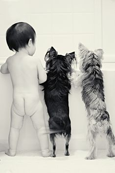 Baby and Dogs photography. Bath time! #yorkie#chihuahua