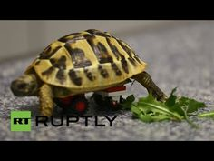 A Doctor Used Lego Bricks To Build A Tortoise An Awesome Wheelchair