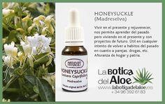 Honeysuckle (Madreselva) Flores de Bach de La Botiga del Aloe