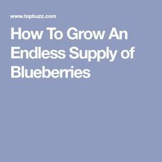 How To Grow An Endless Supply of Blueberries