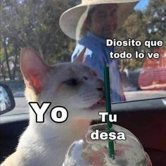 "Gatos Cool on Instagram: ""😼 . . . .... . #memesdegatoscool #gatoscool😸 #gatos_cool #gato #gatos #novios #noviazgo #noviosgoals #lgbt #lgbtq🌈 #cosasdenovios #meme…"" Women"
