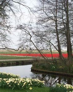 اقنع بحالك والظروف المحيطه دام السعاده فـ الرضا بالمقادير  بسيط واحب الحياة البسيطه خلك على ذي القاعده و إبشر بخير  #Netherlands #kukenhof #park #garden #tulips #red #flowers #yellow #inlove #happy #dayout #blessed #canal #trees #nature #spring #break #2016 #April #travel #enjoy #fun #trip #Holland #love #day by mathol