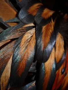 Wonderful Black Gold Jewelry For Beautiful Pieces Ideas. Breathtaking Black Gold Jewelry For Beautiful Pieces Ideas. Feather Painting, Feather Art, Bird Feathers, Parrot Feather, Patterns In Nature, Textures Patterns, Henna Patterns, Design Textile, Fotografia Macro