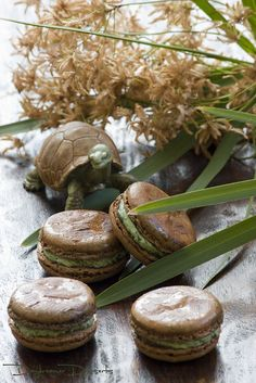 Chocolate Macarons, Lost in the Wild