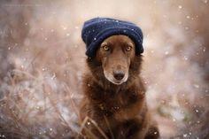 Expressive Dog Portraits By Austrian Photographer Anne Geier