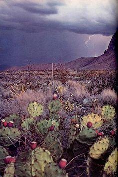 .Desert beauty