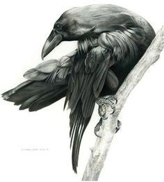 Raven Study by Michael Pape