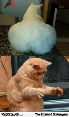 funny cats with captions * funny cats + funny cats video + funny cats and dogs + funny cats memes + funny cats can't stop laughing + funny cats pictures + funny cats and dogs videos + funny cats with captions Funny Cat Captions, Funny Animal Memes, Cute Funny Animals, Funny Animal Pictures, Cute Baby Animals, Cute Cats, Funny Cats, Cute Memes, Really Funny Memes