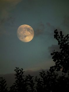 """Rising Moon ~ """"With freedom, books, flowers, and the moon, who could not be happy?"""" ― Oscar Wilde"""