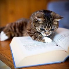 """I can't believe it!"" kitty reads!"