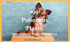 If you are looking to add plants to your home or garden, scan through this list of 199 poisonous plants that are a danger to you and your pets. Pet Puppy, Pet Dogs, Dogs And Puppies, Animal Nutrition, Pet Nutrition, Puppy Drawing, Sick Dog, Cute Dog Photos, Dog Safety