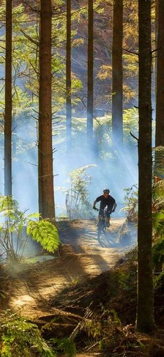 New Zealand, Whakarewarewa Forest is the perfect playground for mountain bikers: