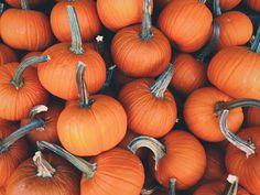 Grow Your Own Pumpkin Patch!