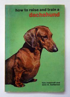 how to raise and train a dachshund