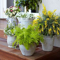 A trio of mosquito-repelling plants makes an attractive potted garden for your deck or patio.