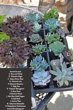 succulent names to use in wreaths by Unskinny Boppy