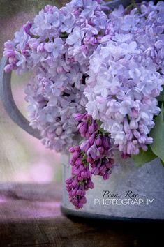 *Lilac *