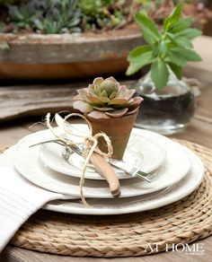 succulents.....in terra cotta....sitting on board with mixed succulent/dalia/roses/etc. + rounded frosted tea lights