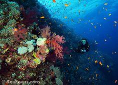 elphinstone reef - Google Search