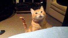 ஜ۩۞۩ஜ Azulestrellla ஜ۩۞۩ஜ: ► Gif Imágenes con movimiento de gatos ◄