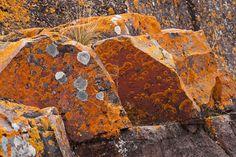Lichen-covered rocks - Little Marais - Lake County, MN