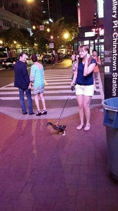 A duck on a leash wearing socks | cute animals