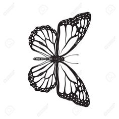 Top view of beautiful monarch butterfly, isolated sketch style illustration. Top , butterfly sketch Top View Of Beautiful Monarch Butterfly, Isolated Sketch Style Illustration Stock Vector - Illustration of majestic, drawing: 84241619 Monarch Butterfly Tattoo, Butterfly Sketch, Butterfly Tattoo Meaning, Butterfly Tattoos For Women, Butterfly Tattoo Designs, Butterfly Thigh Tattoo, Butterfly Outline, Butterfly Painting, Butterfly Design