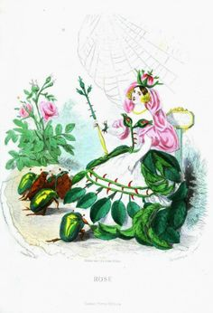 J.J. Grandville Les Fleurs Animees (The Court of Flora) Rose