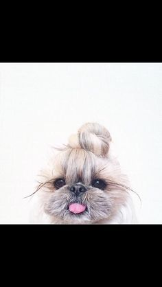 This dog has better hair than me......