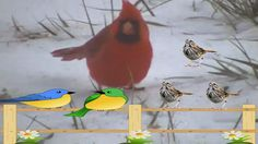 Yes,Another Stupid Bird Watching Video!