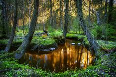 Goldwater Keljonkangas Jyväskylä - Finland by *m-eralp Woodland Forest, Magical Forest, Woodland Theme, Forest Grove, Forest Flowers, Gold Water, Good Old Times, Beautiful Places To Travel, Believe In Magic