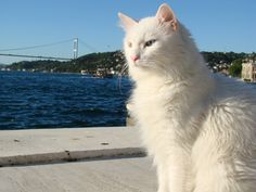 KT by the sea Green Eyes, Cool Cats, Kitty, Sea, Water, Animals, Little Kitty, Gripe Water, Animales